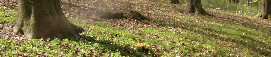 Der Waldmeister