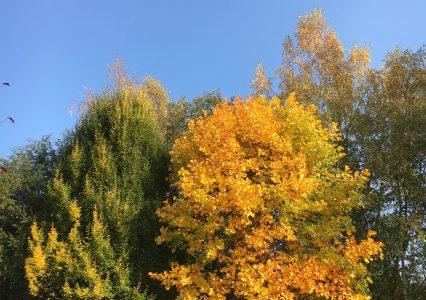 Herbst in Tröstau